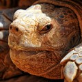 turtle-criss-crossed-621372_1280