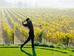 men_golf wine